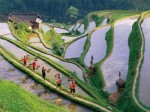 the terraces reclaimed by people of the Zhuang nationality in Guilin